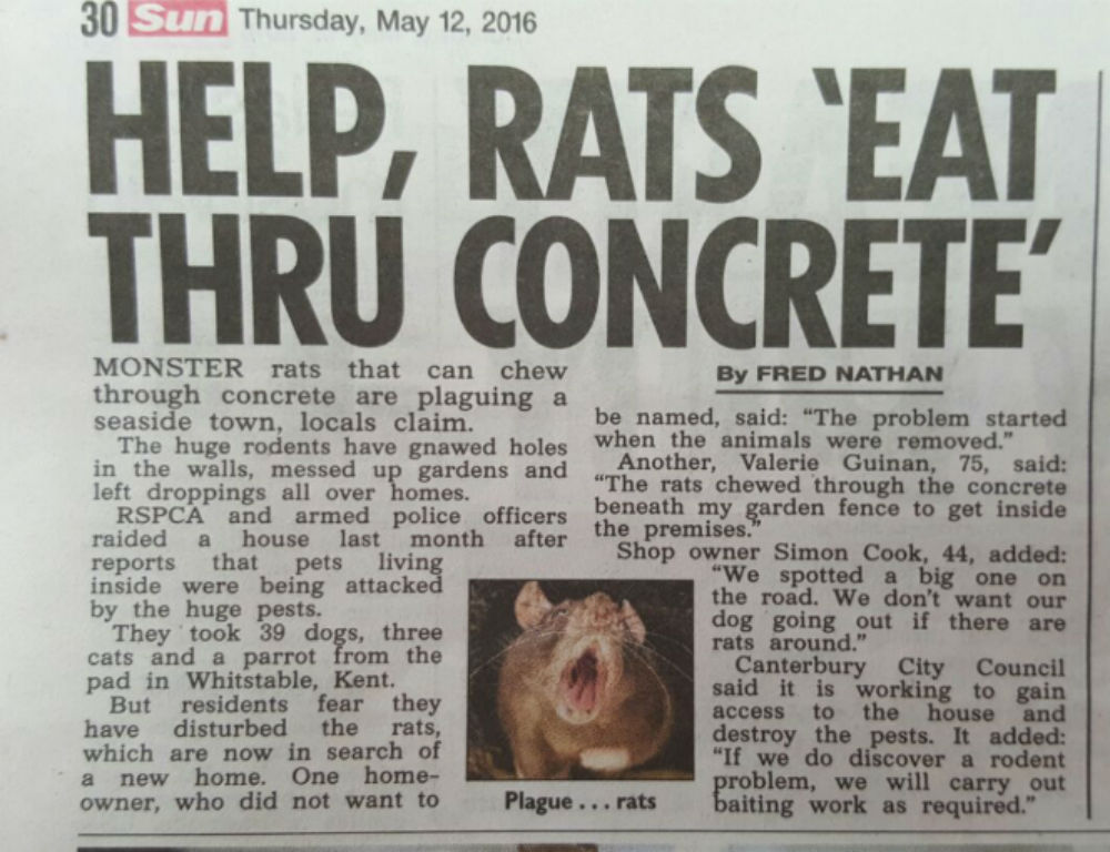 The Sun Rats 12 May 2016 Cropped