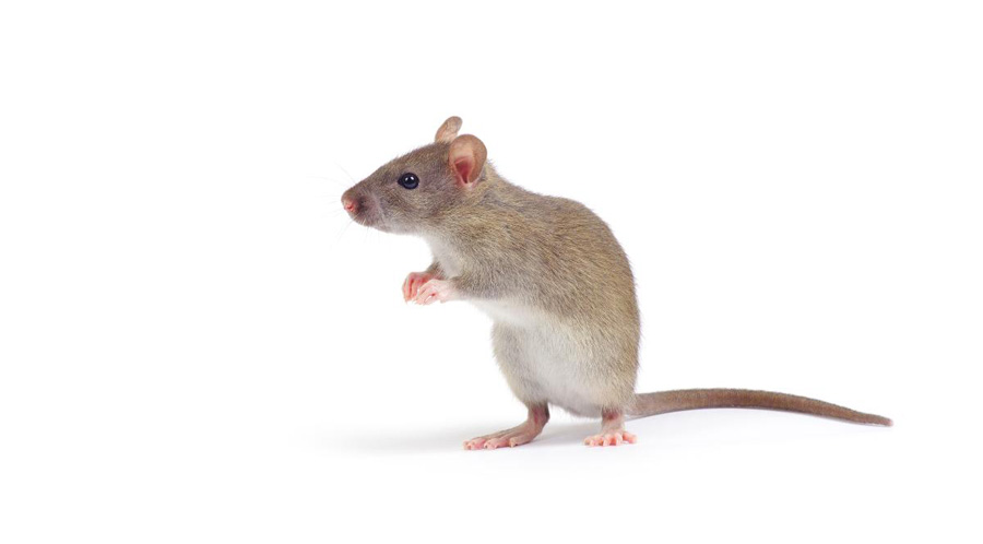 Mouse Control in the Workplace